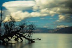 Tree. Nature lake cloud Royalty Free Stock Photography