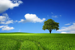 Tree in nature landscape stock image