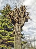 Tree. Nature landscape poland Royalty Free Stock Image