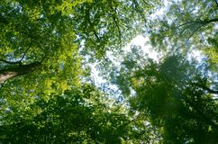 Tree, Nature, Leaf, Green royalty free stock photo