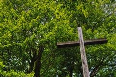 Tree, Nature, Leaf, Vegetation stock photos