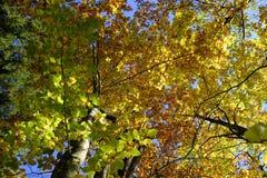 Tree, Nature, Leaf, Yellow stock photo