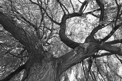 Tree. Nature monochrome perspective foliage Royalty Free Stock Images