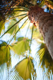 Tree. The nature and panoramas of Egypt. Hurgada royalty free stock image