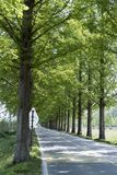 Tree, Nature, Path, Woody Plant stock photos