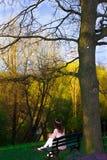 Tree, Nature, Plant, Green stock photo