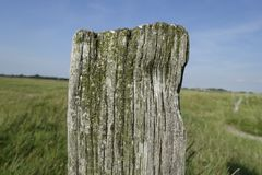 Tree, Nature Reserve, Grass, Trunk Stock Photography