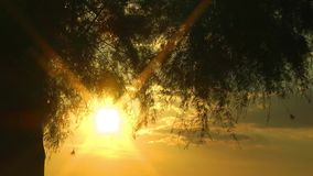 The Tree in Nature and Sunset. Video stock footage