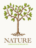 Tree Nature Symbol Stock Photos