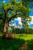 Tree, Nature, Vegetation, Woody Plant royalty free stock image