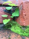 Tree. Nature tree wall Stock Photography