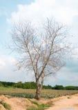 Tree nature on white background. Of Royalty Free Stock Photo