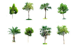 Tree nature on white background. Of Isolated Royalty Free Stock Photos