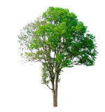 Tree nature on white background Royalty Free Stock Photos