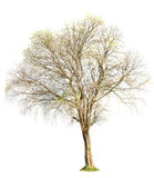 Tree nature on white background Stock Photo