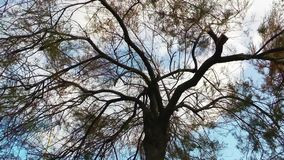 The Tree in Nature and Wind. Video stock video footage