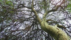 The Tree in Nature and Wind. Video stock video