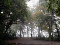 Tree, Nature, Woodland, Leaf royalty free stock photography
