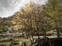 Tree, Nature, Woody Plant, Vegetation royalty free stock images