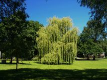 Tree, Nature, Woody Plant, Vegetation royalty free stock photo