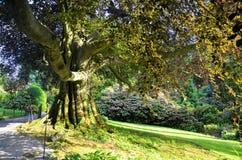 Tree, Nature, Woody Plant, Vegetation