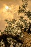 Tree, Nature, Woody Plant, Vegetation stock photography