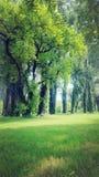 Tree nautral beauti. Beautifull nautral image stock photo