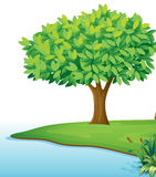 A tree near the body of water. Illustration of a tree near the body of water on a white background Stock Photo