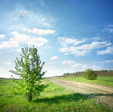Tree near a country road Royalty Free Stock Photo