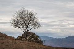 A tree near Jvari monastery Royalty Free Stock Image