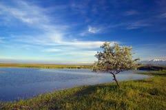 Tree near lake. An along tree near lake Royalty Free Stock Photography