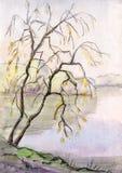 Tree near lake Royalty Free Stock Photography