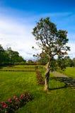 Tree near Norwegian University of Science and Stock Photos
