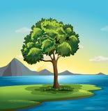 A tree near the ocean. Illustration of a tree near the ocean Stock Photos