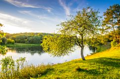 Tree near river, scenic nature landscape. In Lithuania royalty free stock image