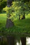 Tree near a river in the sun Stock Photos