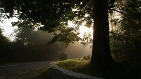 Tree near a road Royalty Free Stock Image