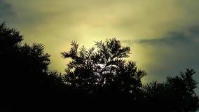 The Tree near the seaside Stock Photography