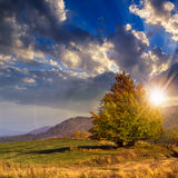 Tree near valley in mountains  on hillside under sky with clouds. Mountain autumn landscape. tree near meadow and forest on hillside under  sky with clouds at Stock Photos