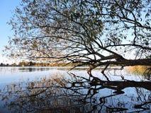 Tree near water, autumn Royalty Free Stock Image