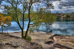 Tree near the water Royalty Free Stock Photography