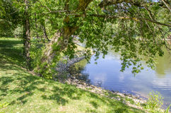 Tree near the water. The tree in the Park by the water Royalty Free Stock Photo