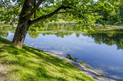 Tree near the water. The tree in the Park near the pond Royalty Free Stock Photography