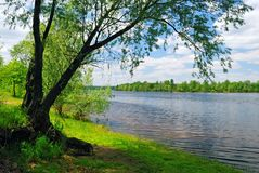 Tree near the water of river Royalty Free Stock Photos