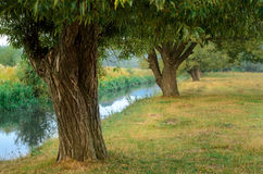 Tree near the water of river. In sunny spring day Royalty Free Stock Photos
