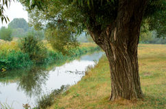 Tree near the water of river. In sunny spring day Stock Images