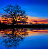 Tree near water on sunset background Royalty Free Stock Images