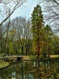 Tree near waterside with bridge in park Stock Image