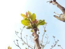 Tree. Nehal worse Stock Photo