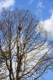 Tree with a nest Royalty Free Stock Photos